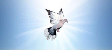 high spirits: Holy Spirit dove flies in the blue sky Stock Photo