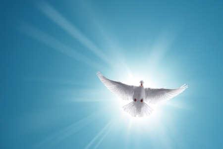 paloma de la paz: El blanco se zambulló en un cielo azul, símbolo de la fe Foto de archivo