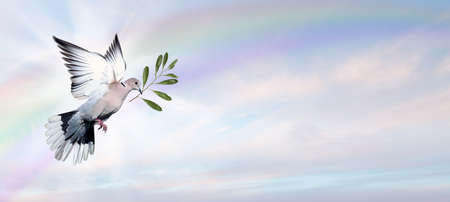 high spirits: Dove Flying with a Green Twig in its Beak Panoramic Image