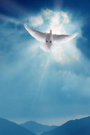 Witte duif in een blauwe hemel symbool van het geloof