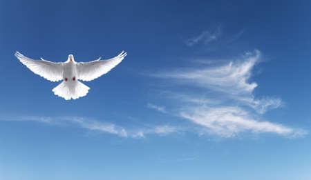 Blanc Saint Colombe volant dans le ciel vue panoramique Banque d'images - 44272237