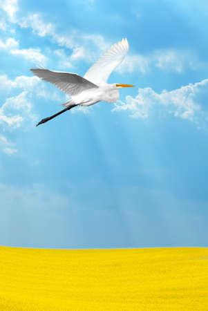 genera: Beautiful tropical crane in flight against blue sky vertical image