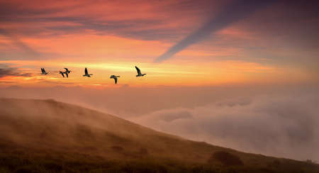 migratory birds: Flying birds across the hill panoramic view Stock Photo