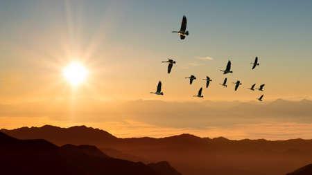 pajaros: Pájaros en el amanecer o el atardecer de otoño concepto