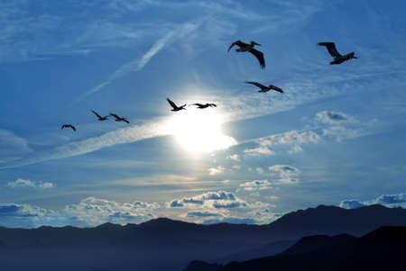 sky background: Birds flying away over blue sky background