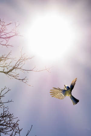 fragile peace: Bird in flight against sunny sky autumn or spring concept