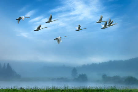 migrating animal: Birds flying away over blue sky background