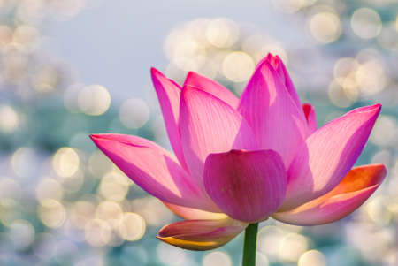 Water lily over bright colorful background