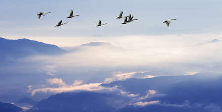 farewell: Sandhill Cranes in Flight at Sunrise above the Mountains Panoramic view Stock Photo