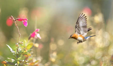 outspread: Bird in flight against bright spring background panoramic view