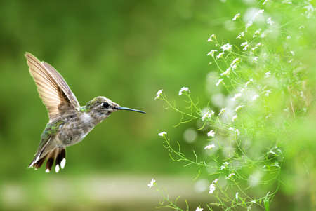 fragile peace: Bird in flight against bright green spring background Stock Photo