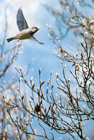 Bird in flight over blue spring tree background Stock Photo