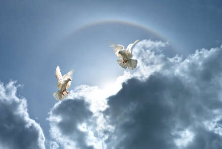 White doves against clouds and rainbow concept for freedom, peace and spirituality