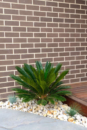 combinations: Combinations of plants, brick wall, paving, decking and rocks