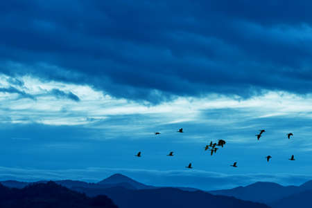 pajaros volando: Birds flying against blue evening sunset in the background environment or ecology concept Foto de archivo