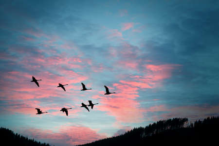 crane fly: Flock of cranes spring or autumn migration Stock Photo