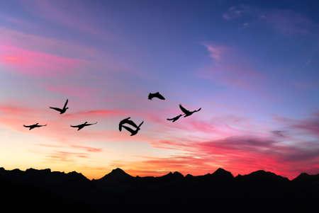 Flock of cranes spring or autumn migration Banque d'images