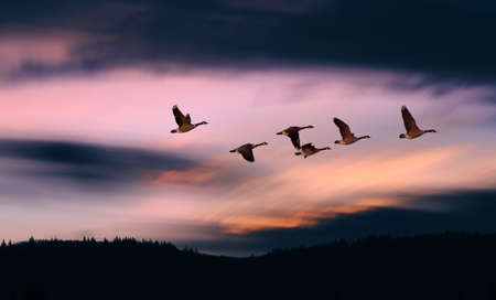Landscape during sunset with flying birds panoramic view