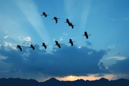 Heldere lucht op zonsondergang of zonsopgang met vliegende vogels natuurlijke achtergrond milieu of ecologie concept