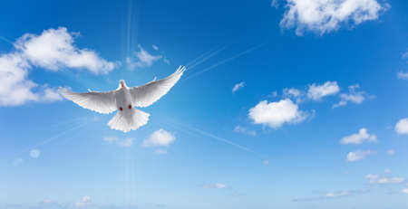 Dove in the air with wings wide open symbol of faith panoramic view Stock Photo - 58825266