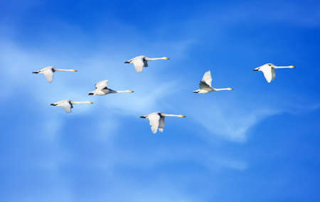 bird flying: Birds flying blue sky in the background environment or ecology concept