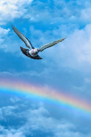 high spirits: Dove in the air with wings wide open symbol of faith vertical image