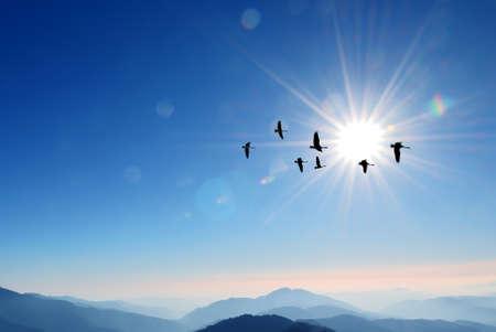 migratory birds: Flying birds over background landscape with solar sky Stock Photo