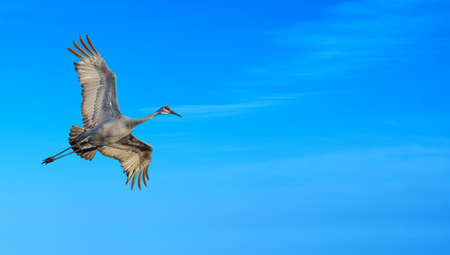 bird flying: Beautiful tropical cranes against soft blue sky panoramic view Stock Photo
