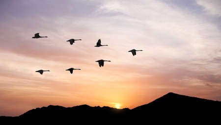 Flying birds across the hill panoramic view 写真素材