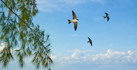 Free flying birds swallow on blue sky background Imagens - 61336473