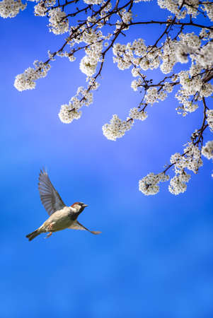bright sky: Tree in full white blossom and bird on sunny day in spring vertical image