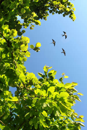 bright sky: Free flying birds swallow on blue sky background