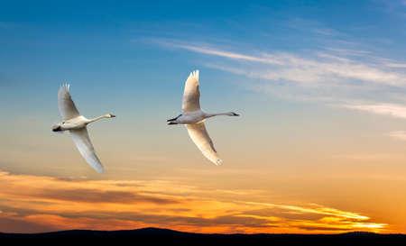 genera: Tree tropical cranes fly overhead against bright sky