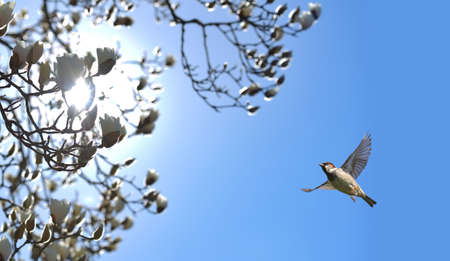 bright sky: Bird in flight against bright blue spring background Stock Photo