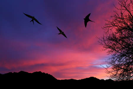 Free flying birds swallow on night sky background Stock Photo