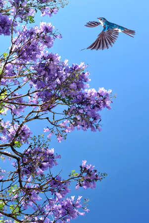 birds in tree: Bird in flight against blue sky with blooming tree on background Stock Photo