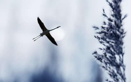 genera: Beautiful tropical bird in flight against night sky background