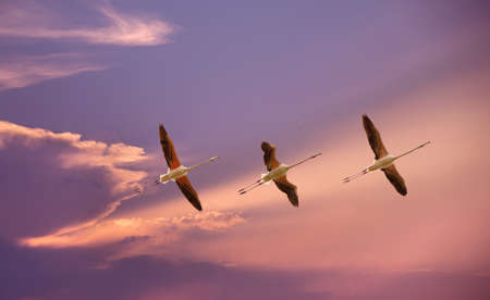genera: Beautiful tropical birds in flight against blue sky panoramic image