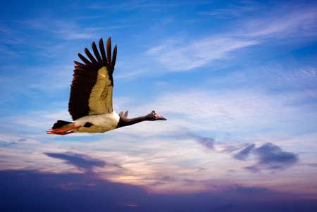 genera: Beautiful tropical bird in flight against beautiful sky background