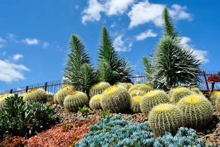 Exotic plants in Royal Botanic Gardens Melbourne Australia