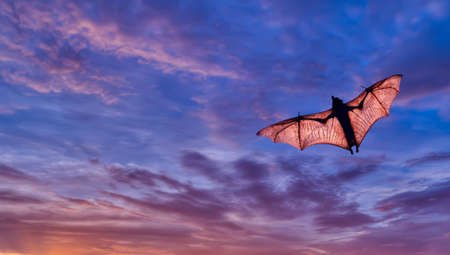 fruit bat: Halloween night with bat flying over purple sky