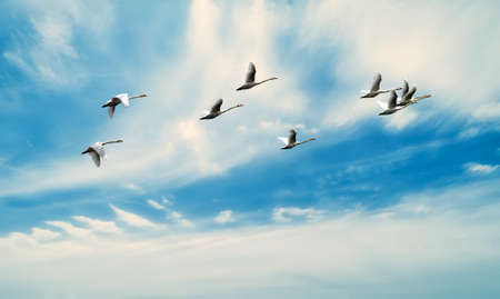 Birds flying against blue sky in the background environment or ecology concept Banque d'images