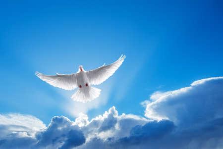 Paloma en el símbolo de la fe de aire sobre fondo brillante Foto de archivo
