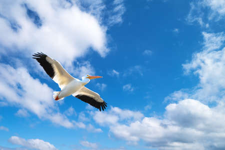 genera: Beautiful tropical bird in flight against blue sky panoramic image