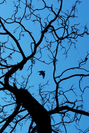 outspread: Black crow and tree on blue background vertical image