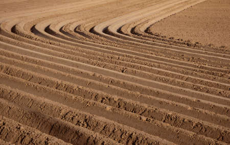 cropland: Agricultural background of newly plowed field ready for new crops