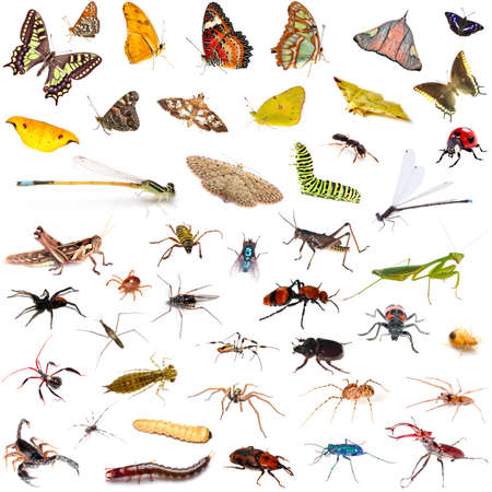 imago: Set of colorful tropical butterflies and insect zoology entomology biology