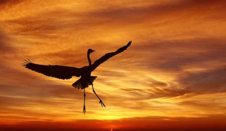genera: Beautiful tropical cranes against sunrise panoramic view