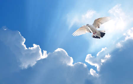high spirits: Holy Spirit dove in blue sky bright light shines from heaven