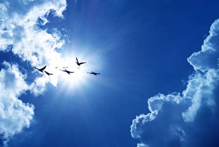 Birds flying blue sky in the background environment or ecology concept